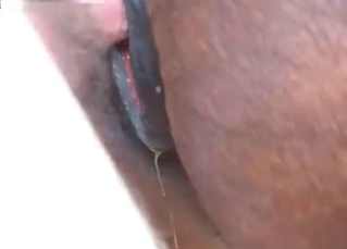 Ravishing dude fucks horse's ass