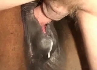 Pony fucking session with a hung dude